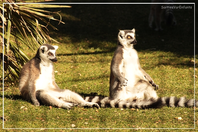 zoo, parc, animalier, animaux, enfants, famille, var, bouches du rhone, sortir