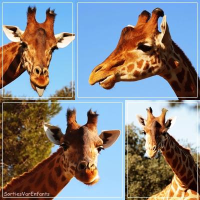 zoo, barben, Var, Bouches du rhône, enfants, famille, sortir, sortie, parc, animalier, animaux