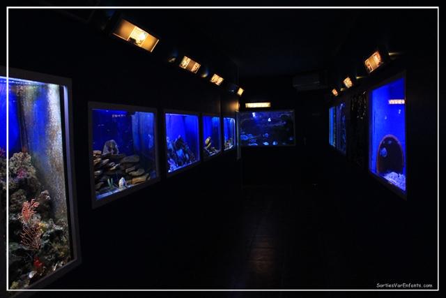 institut oceanographique paul ricard l 238 le des embiez et ses tr 233 sors marins sorties var enfants