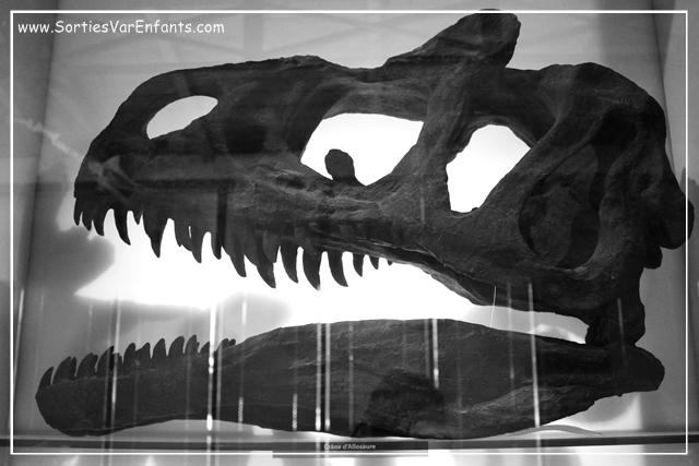 Le Musée d'Histoire Naturelle de Toulon