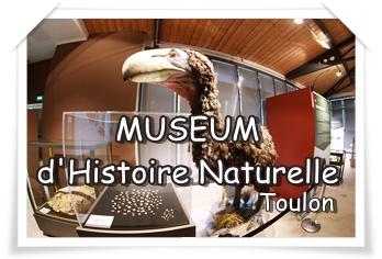 MUSEUM D'HISTOIRE NATURELLE De Toulon et du Var, la visite culturelle à portée de tous !