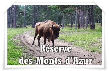 RÉSERVE DES MONTS D'AZUR : séjour avec les Bisons